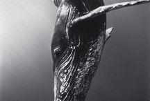 Under the sea / by Margo Bangert