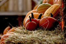Holidays n Seasons / by Christine Vrablic