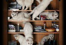 Literary Cats / Cats and books, books and cats. Who ever said a feline couldn't read or write? The proof is in the pinboard. / by Hyperion Books