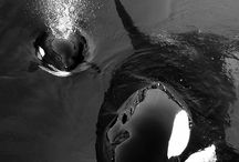 Under the Sea / by Jenn Massey