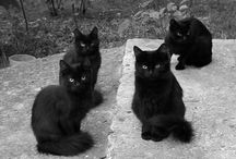 Black kitties are awesome / by SoupAddict