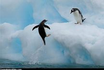 Happy Feet.. / by Jeannine Gushiken