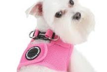 Dogs Fashion / by M. Celia