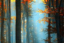 I love Autumn.  / by Krystal Vinson