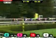 Great Race Calls / Some of the best race calls ever! / by Lone Star Park at Grand Prairie