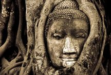 Buddha / by Tara Curtis