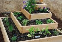 gardening / by Wendy Greer