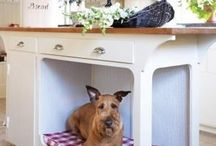 Pet decor / by Tammi Floyd