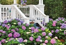 Garden stuff / by Mindy Hoyler