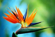 Tropical Flowers / by Lauren V