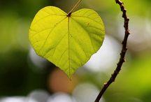Hearts / by Joy Chiang