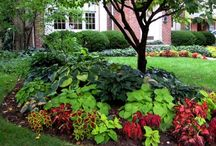 curb appeal / by Christie Klassen