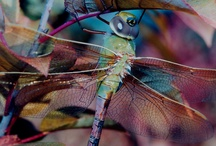 dragonflies / by Bobbie Barnett