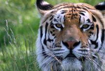 Sanctuaries we Love! / by Crown Ridge Tiger Sanctuary