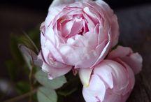 Flowers / by Caroline Ricci