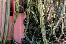 Plants / by Mar Espanol