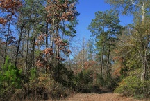 East Texas Places / Places we recommend checking out in beautiful east Texas, USA / by East Texas Etsy Team