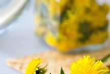 Dandelions for food and Medicine / All Dandelions, all the time.  Hoping to find over 100 ways to put this weed to good use. / by Common Sense Homesteading