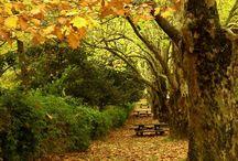 Beautiful Nature / Mother nature's beauty. Natural setting and beautiful setting / by Abdullah Khamis