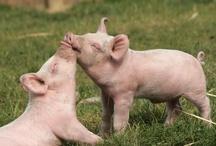 Little pig little pig / by Carla Eide