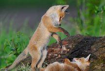 Animals / by Heather Powell Soelch