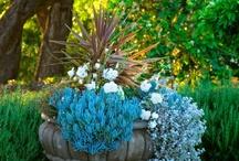 Beautiful Colors / by Megan McMillan