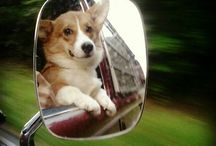 Corgis In Mirror: Cuter Than They Appear! / by Daily Corgi