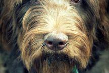 Best Friends with Fur / by Brenda Little