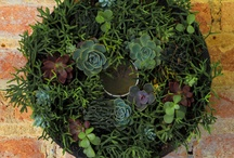 Jardinería / by Betty Becher