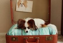 Pet Accessories / Pet accessories / by Treasured Friends - Pet Memorials / Pet Keepsakes