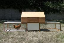 Chicken Coops / by Michelle Slatalla