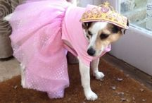 ♥Plum♥ / What a pooch!  / by Katie Davies