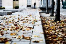 Autumn / by Allegra Fryxell