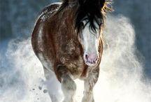 Animals to love / by Jayne Burdick