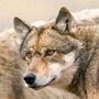 Defenders of Wildlife / by Nancy Moore