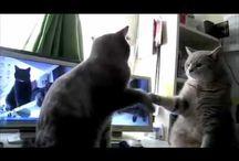 Cat Videos / by Pop Culture Freaks