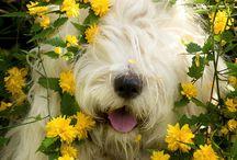 Prettiest dog ever / by Annie E. Ledón