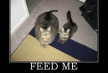 Feed Me / by Jewely