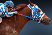 Secretariat-the greatest!!! (And others)! / My very favorite racehorse of all time!!!! / by jana lewis