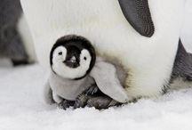 Penguin / by Desak Putu Hita Karina Riadika Mastra