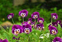Flowers  / by Vasu Sharma