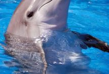<3<3<3<3Dolphins / by April Thompson