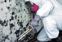 Chicago Mold Services / by Morgan