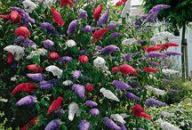 Gardening / by Rita Jones