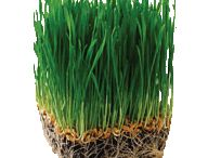 The Wheatgrass Plant / by DynamicGreens