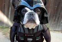 Star Wars Stuff / by Pam Frese