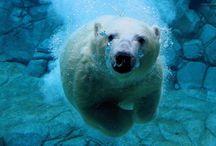 Polar Bear Love / by Dani Ploscik