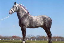 Horses-Percheron / by Christa Gettys