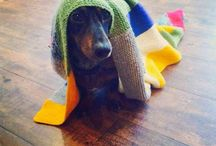 Cute & knit animal / by Balaine Laine