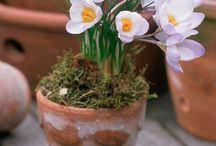 Elusive Spring! / by Lynn Franklin